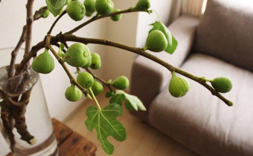 無花果の枝を。